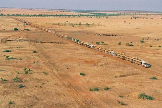 pouch - cattle in australia